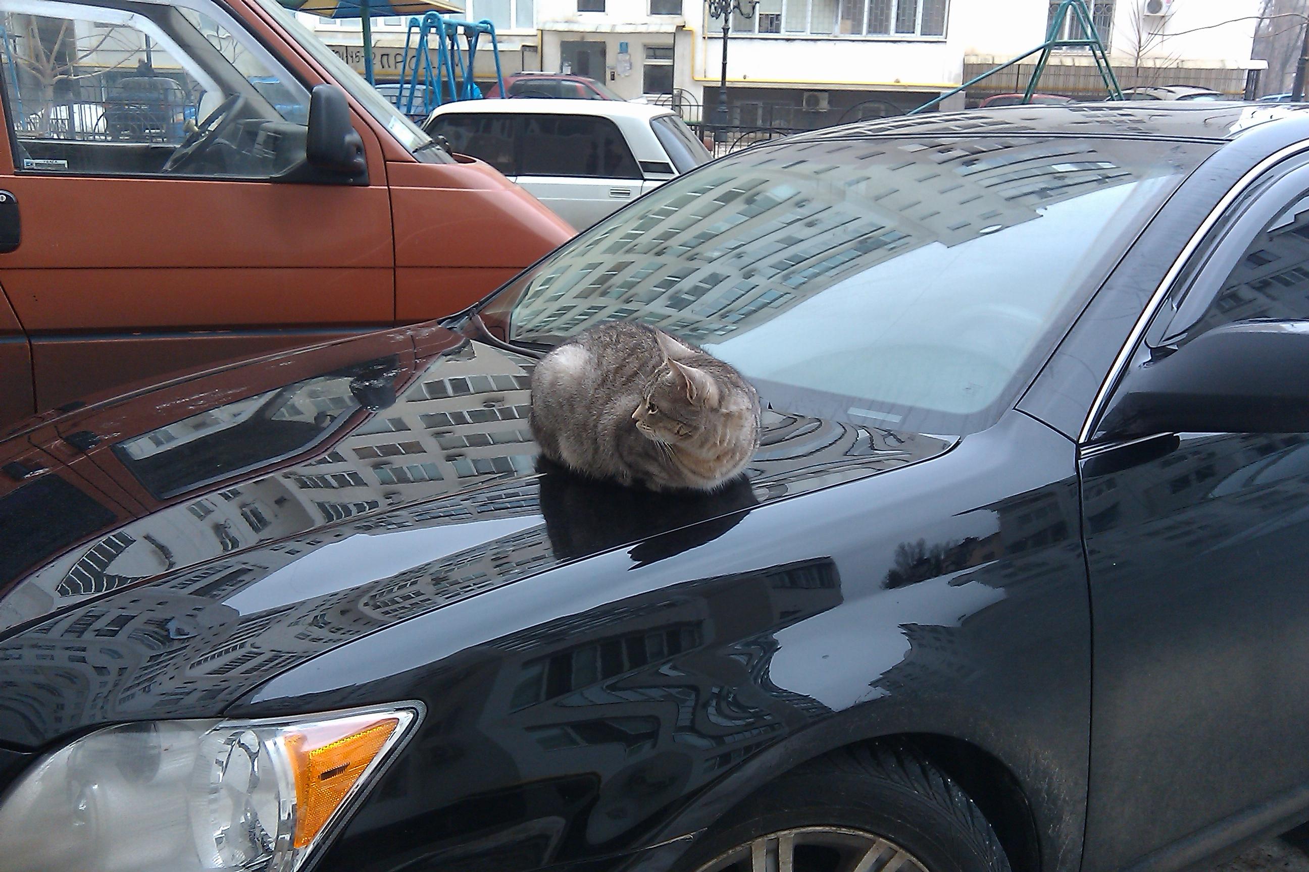 Коты на авто кемерово